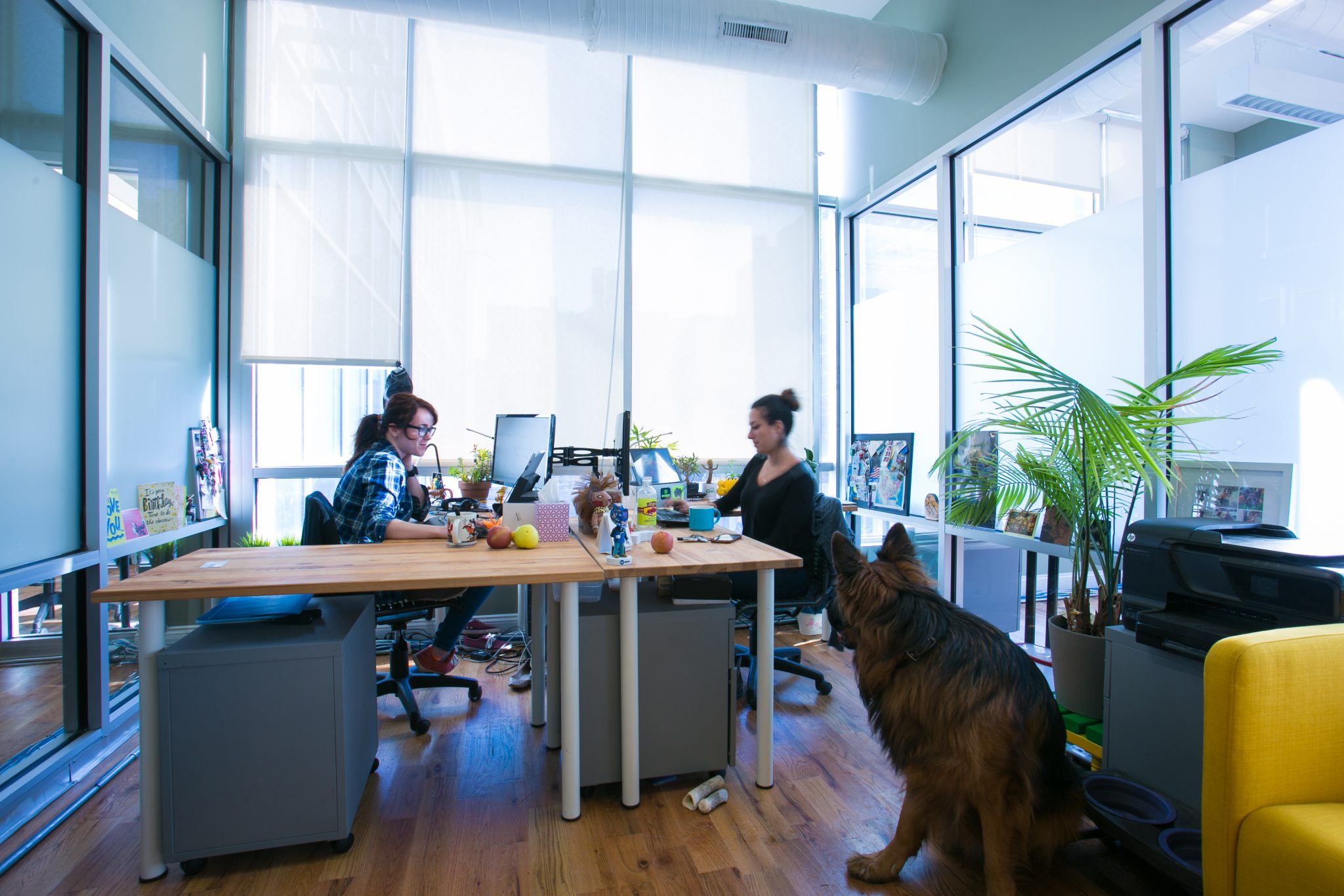 ... Weekly Office Cleaning; Pet Friendly Offices